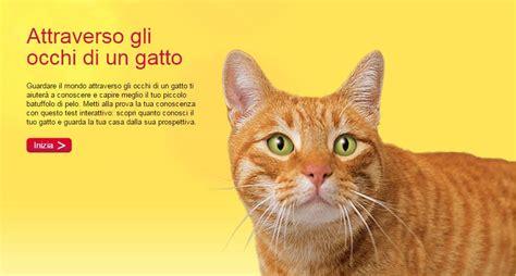 gatti con occhi diversi i gatti con gli occhi di colori diversi petpassion tv