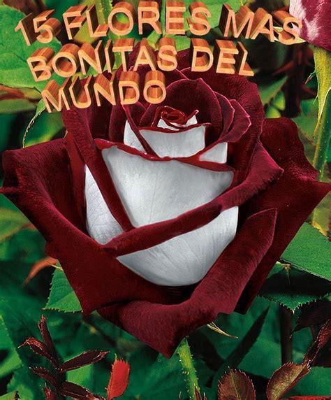 imagenes de rosas hermosas unicas las flores mas bonitas del mundo youtube