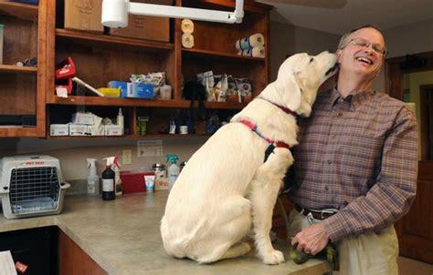 golden retriever puppies fayetteville ar cancer study using golden retrievers nwadg