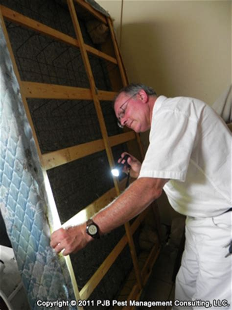 bed bug inspection professional bed bug inspection