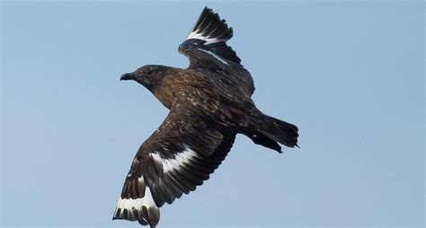 desde un barco un observador determina aves marinas aves cant 225 bricas