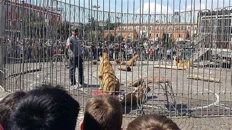 mi sento in gabbia leoni in gabbia in piazza a scoppia la polemica