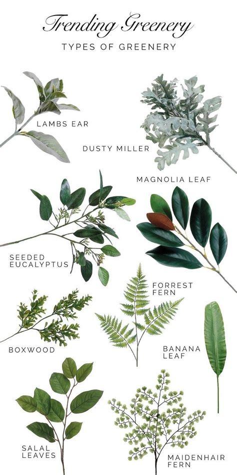 a guide to identifying your home d 233 cor style 25 best plant identification images on pinterest types
