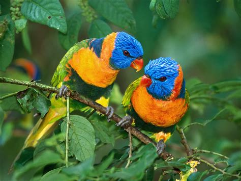 wallpaper with birds wallpaper gallery love bird wallpaper 1