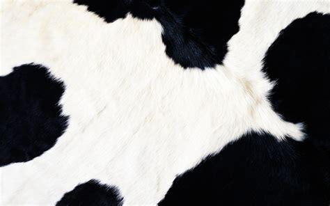 Cow Fur Cow Fur Wallpaper 15379