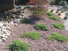 landscaping ground cover ideas decorative ground cover