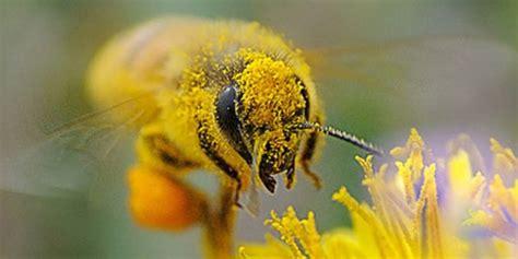 polline dei fiori che rapporto c 232 tra insetti e fiori garden4us