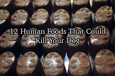 what can you feed a puppy 12 human foods you didn t could kill your