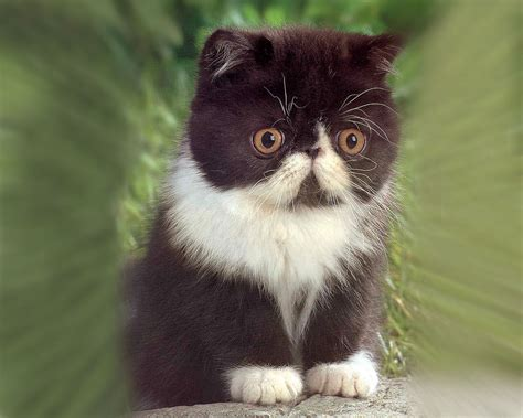 Cutest Cats by Kittens Pictures The Wondrous Pics