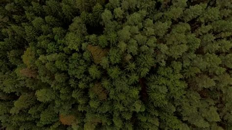 texture pattern forest 4k aerial view flying over green tree tops of dense forest