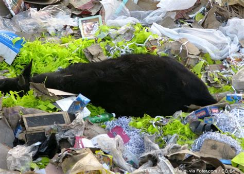 plastic pollution is killing india s sacred cows plastic