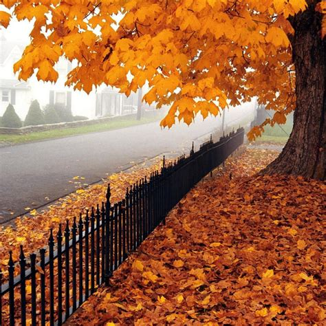 what is my color season 10 reasons why autumn is my favorite season