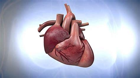 imagenes reales corazon humano de paseo por el coraz 243 n humano 191 c 243 mo funciona