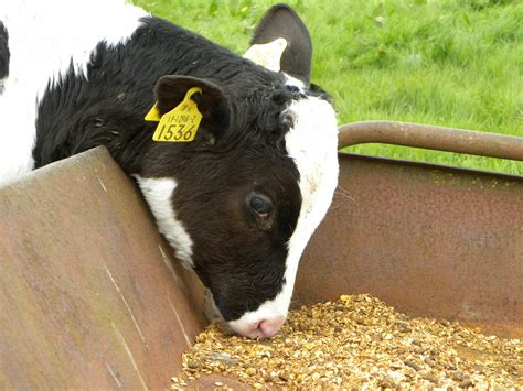 How to reduce heifer rearing costs by focusing on the pre weaning period agriland