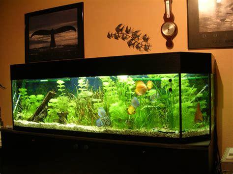 aquarium im wohnzimmer aquarium ponzini wohnzimmer