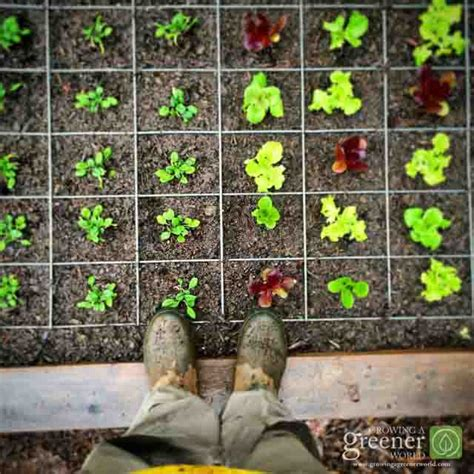 ultimate tomato cage growingagreenerworldcom