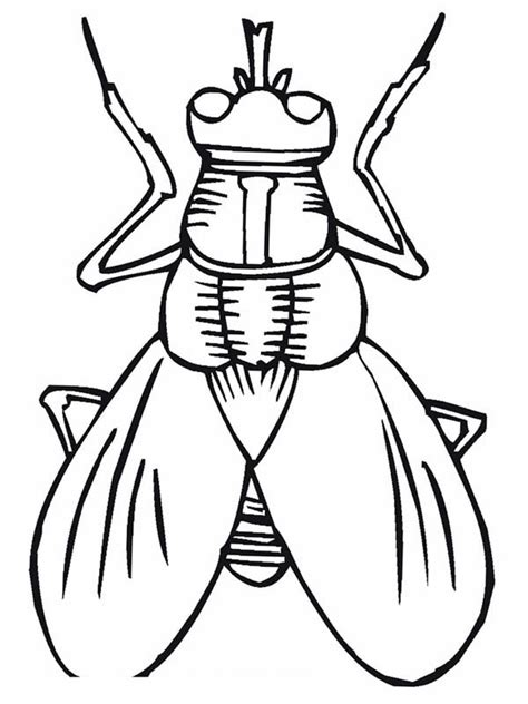 fly coloring pages images reverse search