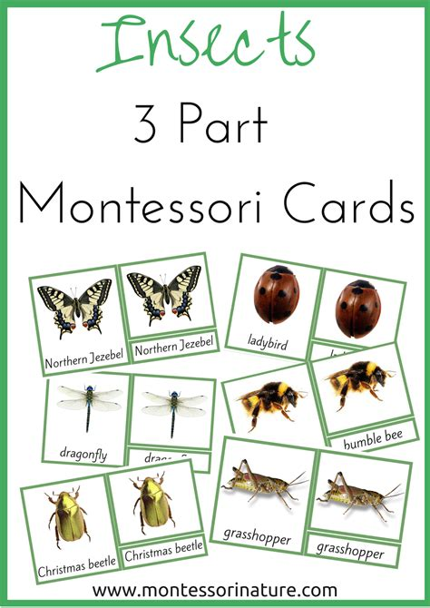 Montessori Nomenclature Cards Template by Insects 3 Part Montessori Nomenclature Cards Montessori