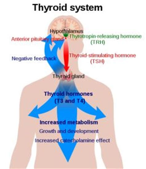 How Does Bromide Detox Last by 119 Best Healthy Thyroid Other Hormone Related Info