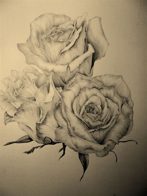 sketch rose tattoo pencil sketch for a