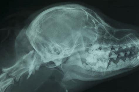 brain x brain x
