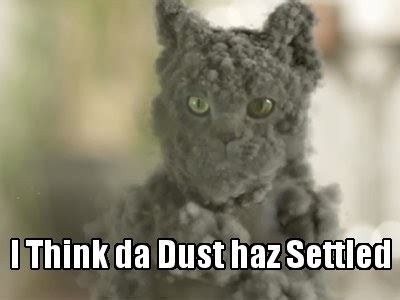 Dust Cat the eco cat speaks returning to the land of the living