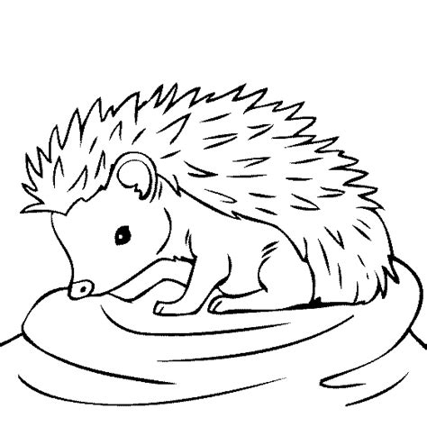 coloring page of a hedgehog baby hedgehog coloring page these coloring pages are fun