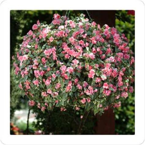 heat resistant plants find a plant