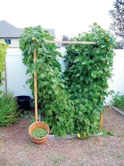 Vegetable Garden Trellis Ideas Vegetable Garden Trellis Ideas Photograph Garden Trellis D
