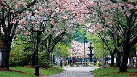 Free Warrant Search Macon Ga Third Park Festivities 11th Hour