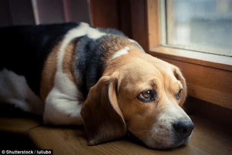 Do Dogs Shed When Stressed by What Happens To Your When You Leave It Alone Daily