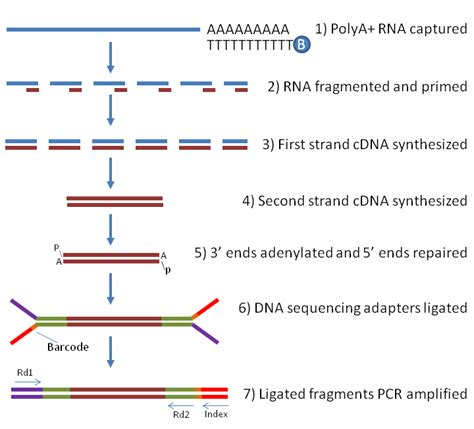illumina sequencing protocol rna seq using next generation sequencing