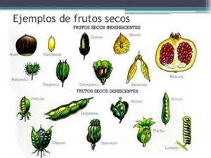 tipos frutos