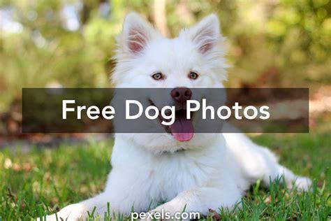 images 183 pexels 183 free stock photos