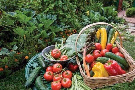 backyard fruit and vegetable garden organic fruit and vegetable gardens www coolgarden me