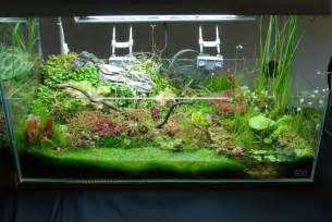 my g rdening frenzy planted tank amp terrarium