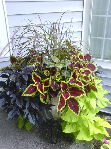 mixed foliage container tips for color combinations and keeping the plants looking their best