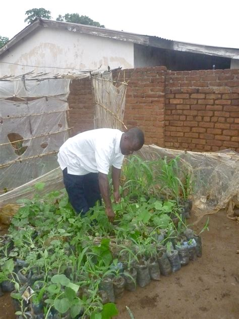 cheap container gardening container gardening in malawi harry