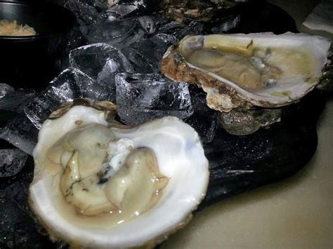 bar st pete the oyster bar st pete review