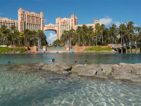 atlantis comfort suites photo1 jpg picture of comfort suites paradise island
