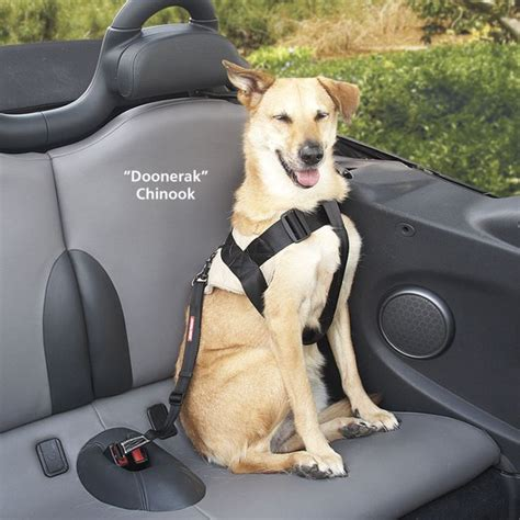 canine car seat belts secure your in the car just clip this to your s
