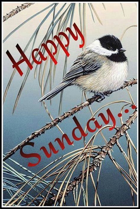 happy sunday sunday quotes sunday  happy sunday morning