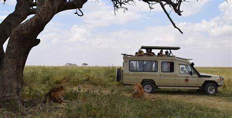 best safari tour operators best wildlife safari tour operators cing and