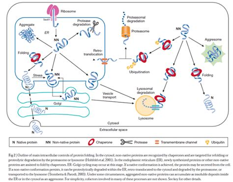 e protein how to improve expression level of active and soluble
