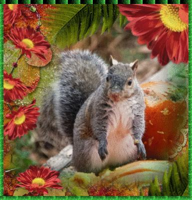 622222068592 Artsi Glitter Pets Squirrel grey squirrel squirrels autumn fall picture 114290030 blingee
