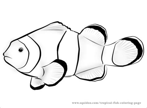 coloring page tropical fish tropical fish coloring page clipart best clipart best