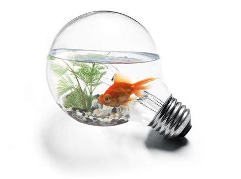 specialist lamps light bulbs