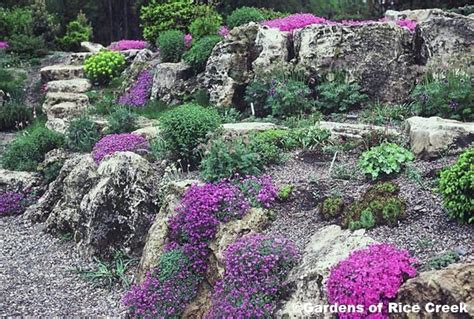 Rock Garden Mn 78 Best Ideas About Rock Garden Design On Pinterest Succulents Garden Rockery Garden And