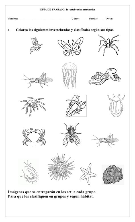 imagenes animales invertebrados dibujos de animales vertebrados e invertebrados para