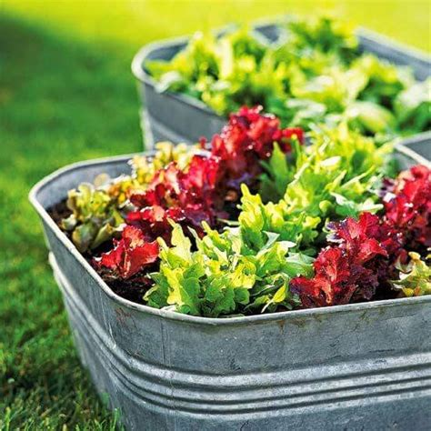 lettuce container garden 10 vegetables for container gardening mother2motherblog